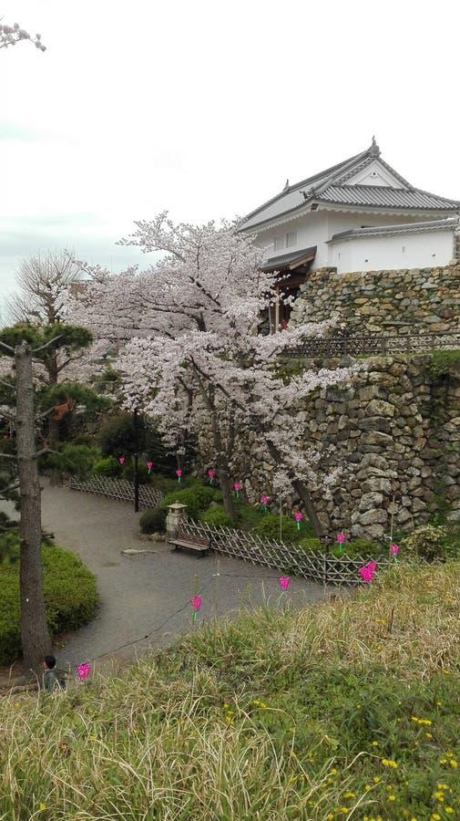 樱花和城堡 库存照片