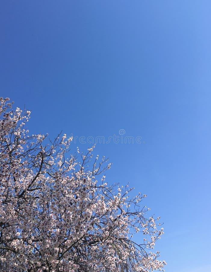 樱花和天空 图库摄影