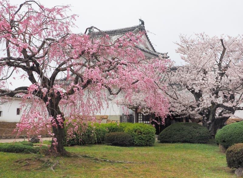 樱花在姬路公园防御,姬路,日本 免版税库存图片