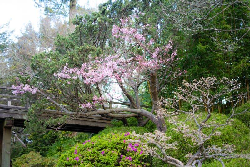 樱花在3月 库存图片