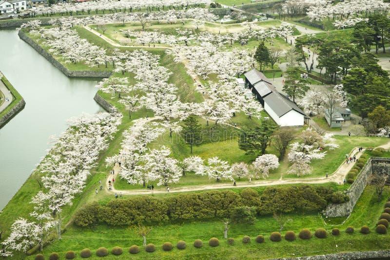 樱花季节在Goryokaku公园 免版税图库摄影