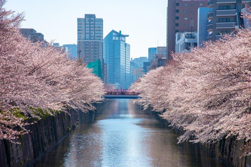 樱花季节在Meguro河的,日本东京 免版税库存图片