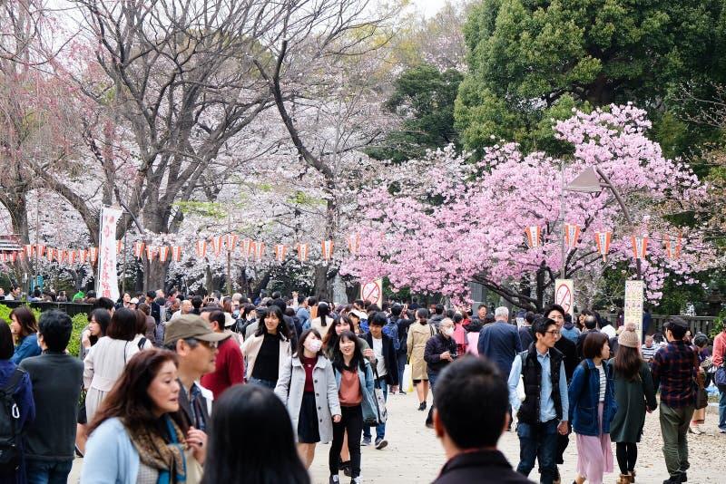 樱花季节 图库摄影