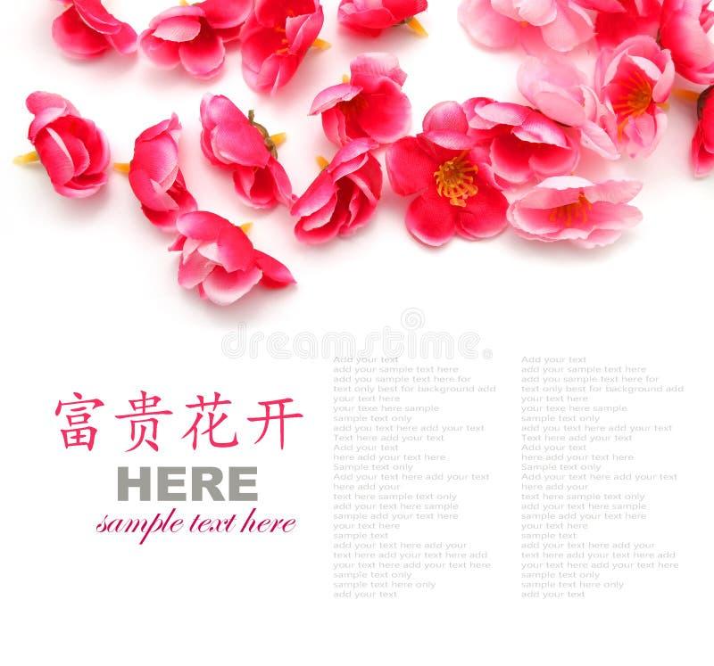 樱花或李子花 图库摄影