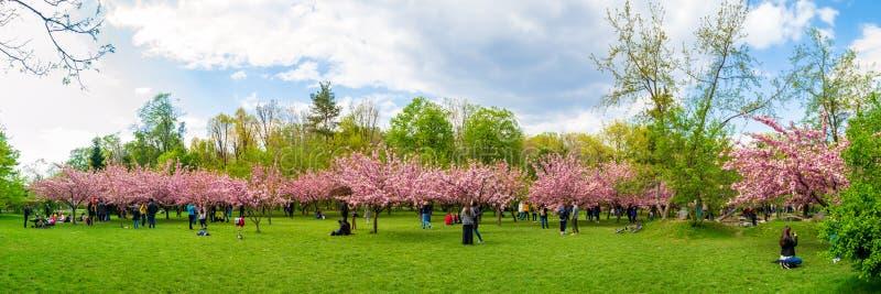 樱花树和游人在布加勒斯特的迈克尔I前Park Herastrau国王公园,罗马尼亚日本庭院里  库存图片
