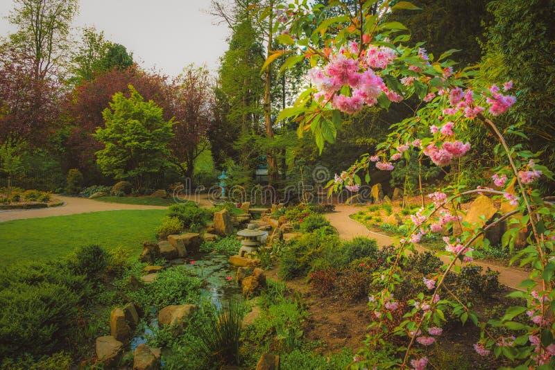 樱花树在日本庭院里 免版税库存照片