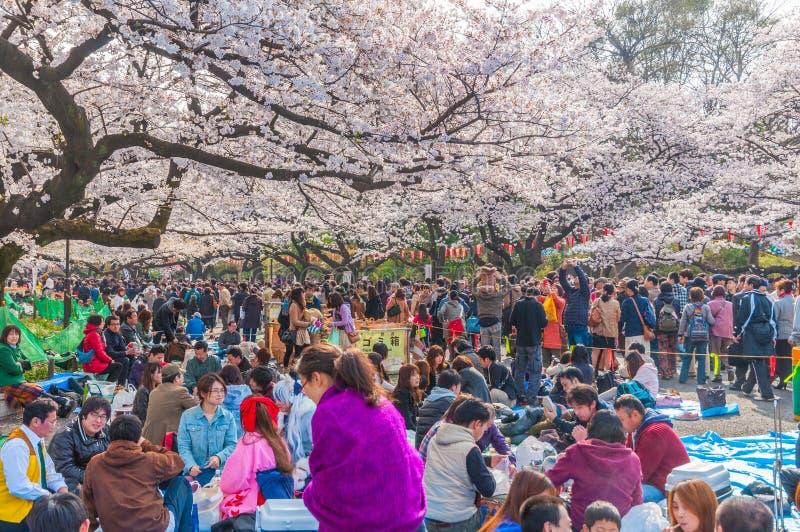 樱花节日在上野公园,东京,日本 免版税图库摄影