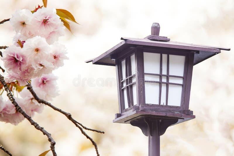 樱花,在开花的桃红色花有好的背景 库存照片