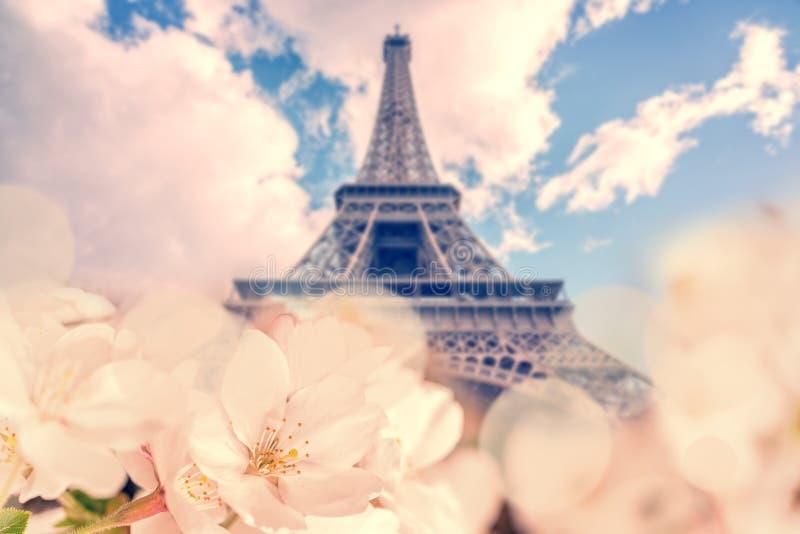 樱花,埃佛尔铁塔在背景中,春天在巴黎法国 免版税库存图片