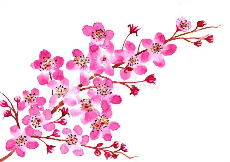 樱花水彩 库存图片