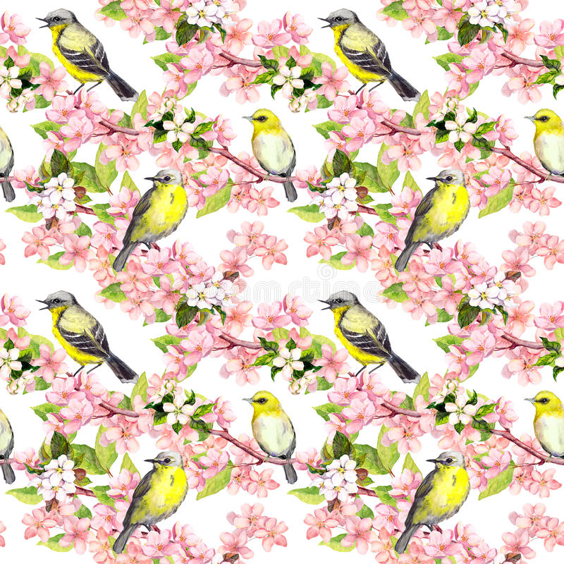 樱花-苹果,佐仓开花,鸟 无缝花卉的模式 水彩 向量例证