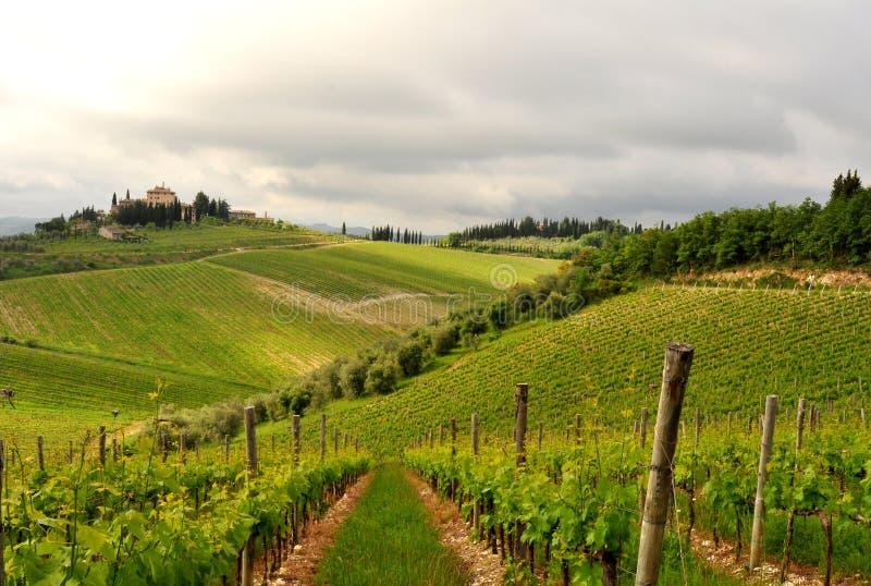 橄榄树和葡萄园在托斯卡纳,意大利 库存图片