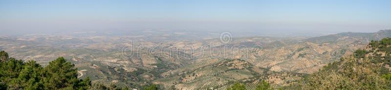 橄榄树在哈恩省(西班牙) 免版税库存照片