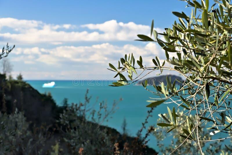 橄榄树小树林和庭院有海视图 免版税库存图片