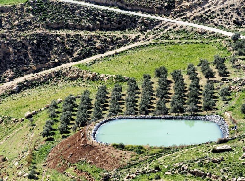 橄榄树小树林的灌溉的存贮水池在Karak,约旦附近的沙漠 库存照片