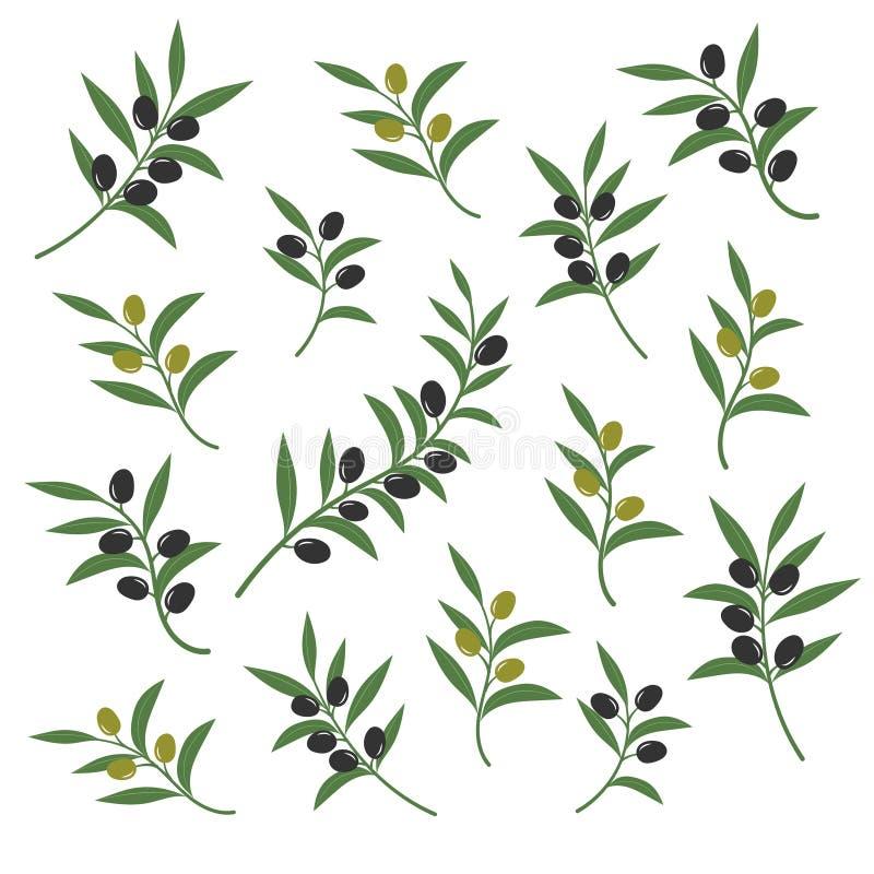 橄榄树枝集合传染媒介例证 在白色背景隔绝的意大利西西里人或希腊油绿色分支标志 库存例证