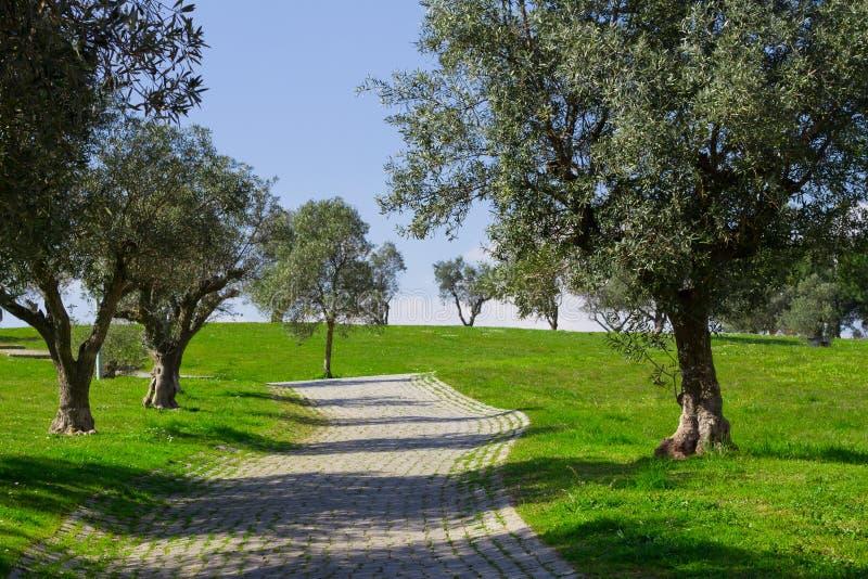 Download 橄榄树 库存照片. 图片 包括有 横向, 方式, 背包, 自然, 国家(地区), 西班牙, 地中海, 蔬菜 - 30335068