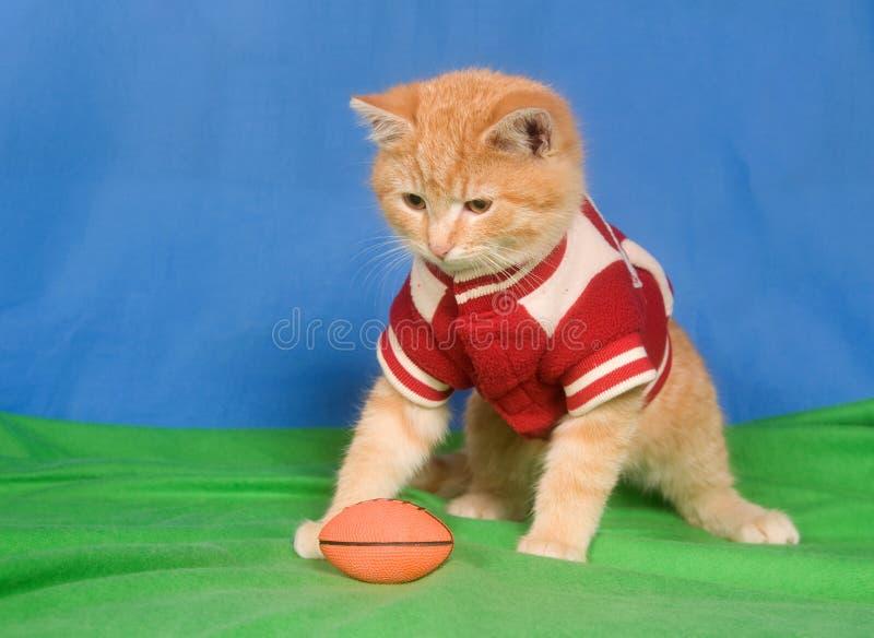 橄榄球小猫 免版税图库摄影