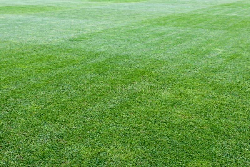 橄榄球绿色操场体育场 库存图片