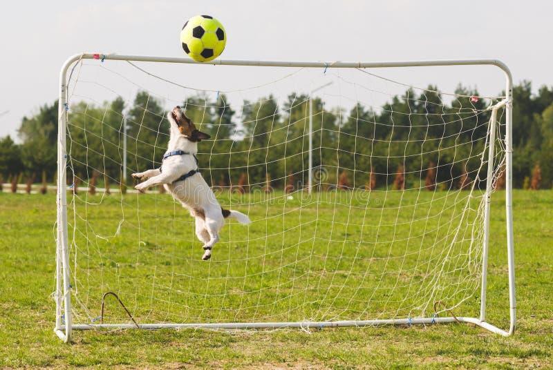 橄榄球足球击中标志横线,当跳跃滑稽的老板保存目标时 免版税库存图片