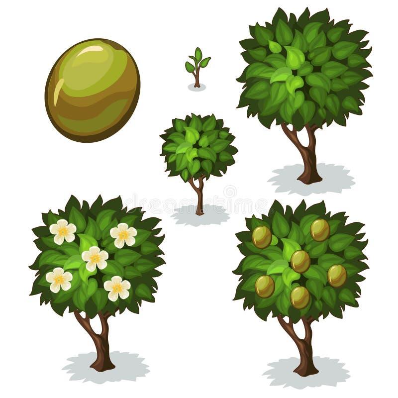 橄榄的种植和耕种 向量 向量例证
