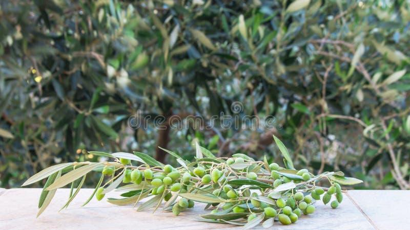 橄榄色的束,在背景的被弄脏的橄榄树与一个室外题材 库存图片