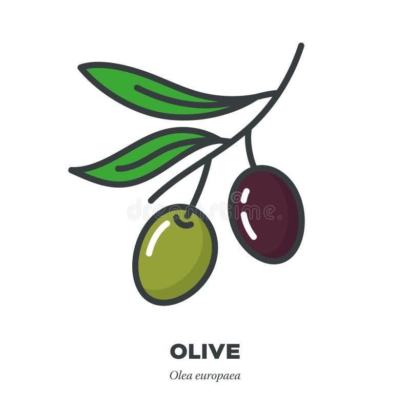 橄榄色的果子象,填装了概述样式传染媒介 库存例证