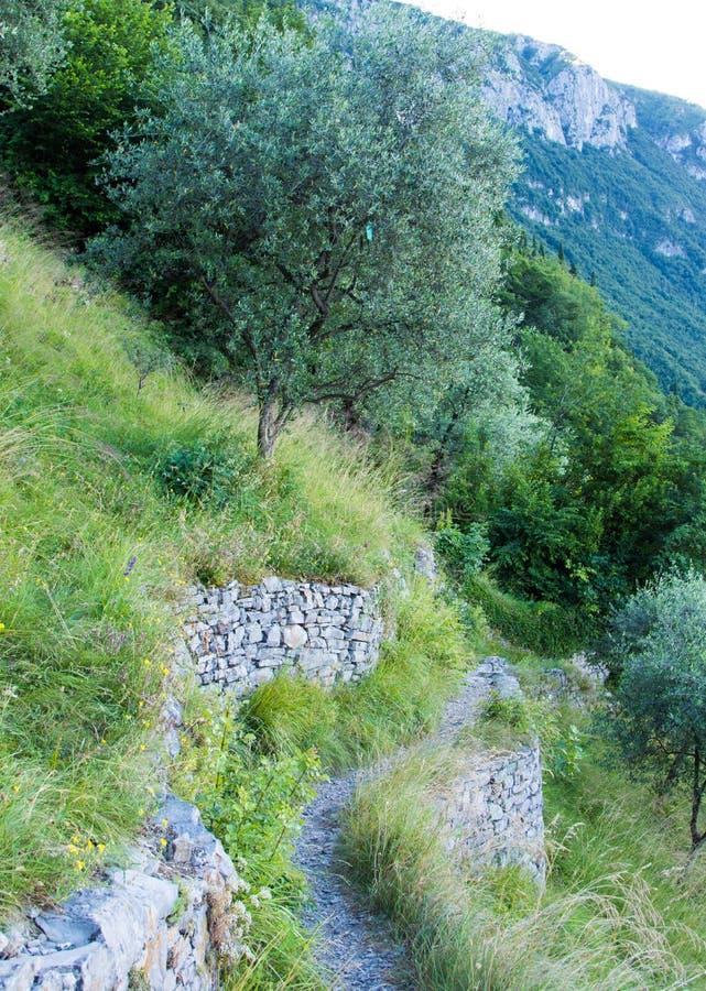 橄榄色的足迹 库存图片
