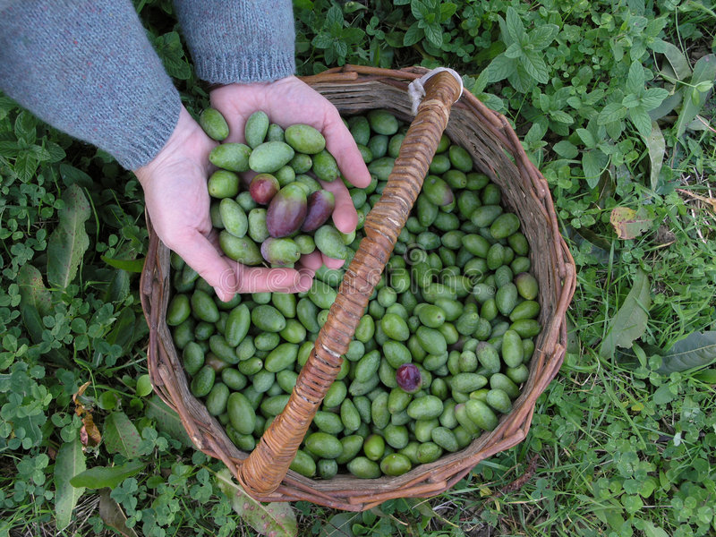 橄榄 免版税库存图片