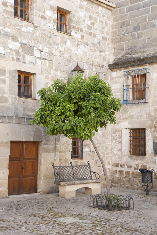 橙树在胡安de巴伦西亚广场,宇部 库存图片