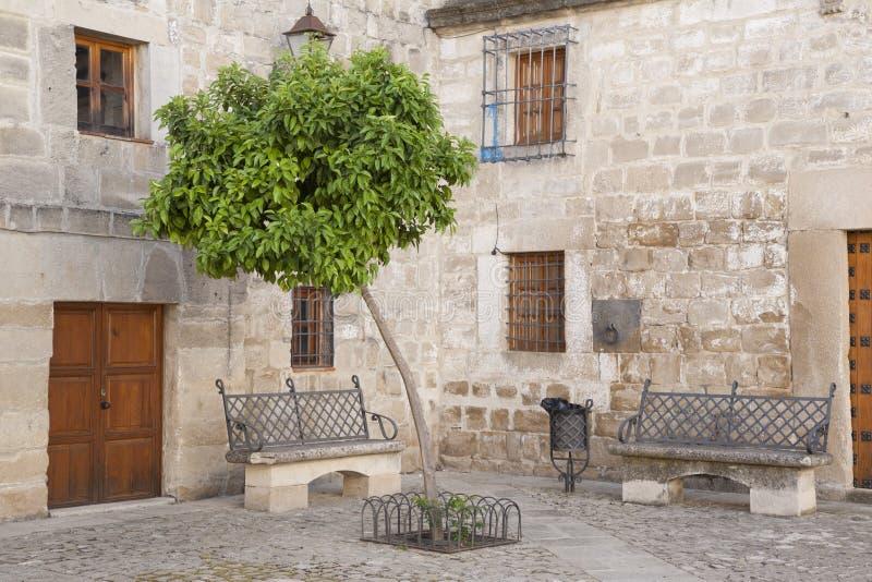 橙树在胡安de巴伦西亚广场,宇部 免版税图库摄影