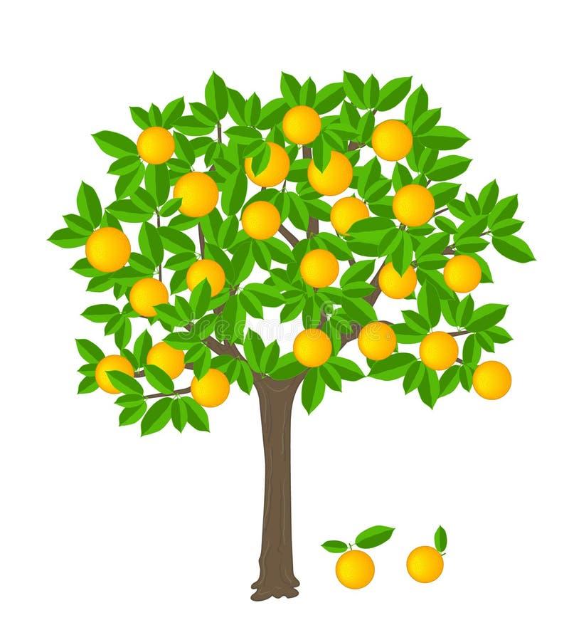 橙树 向量例证