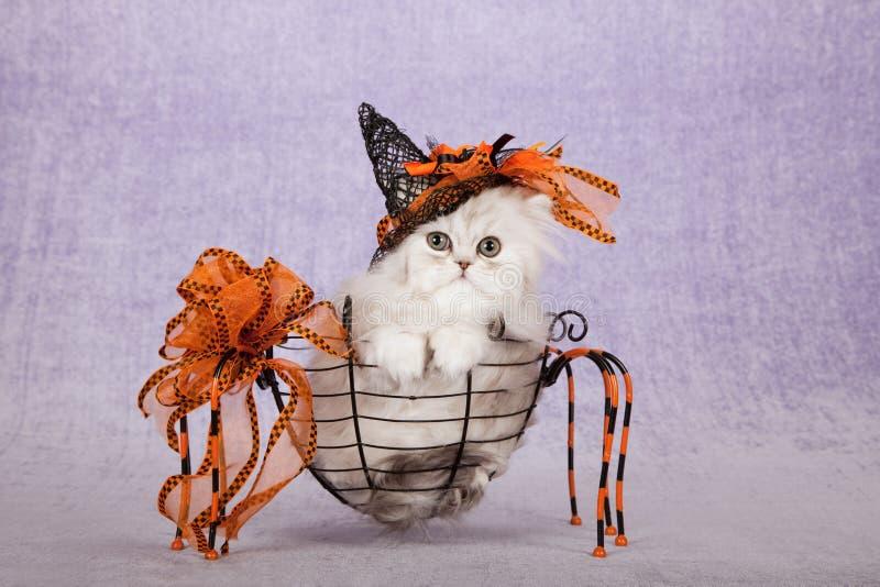 戴橙色万圣夜巫婆帽子的银色黄鼠小猫坐在蜘蛛形状金属篮子里面 免版税库存照片