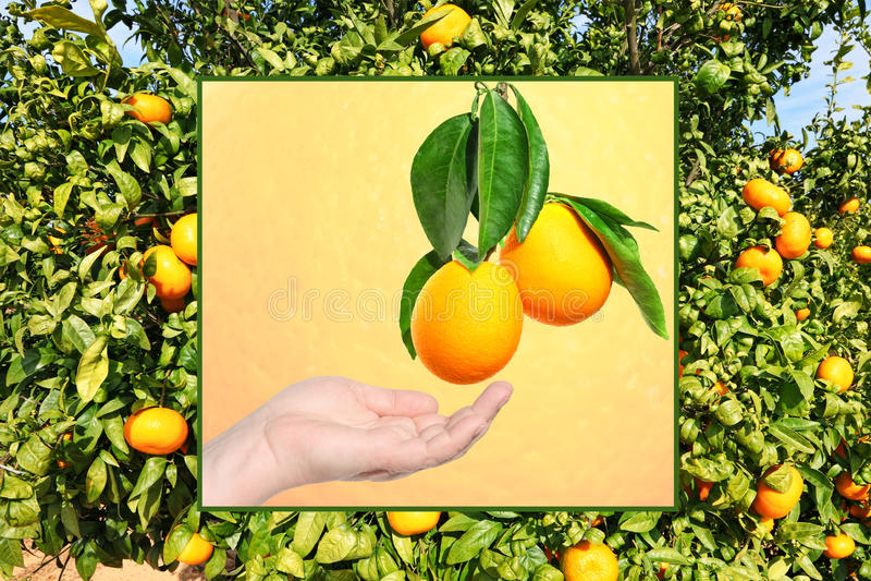 橙色世界 免版税图库摄影