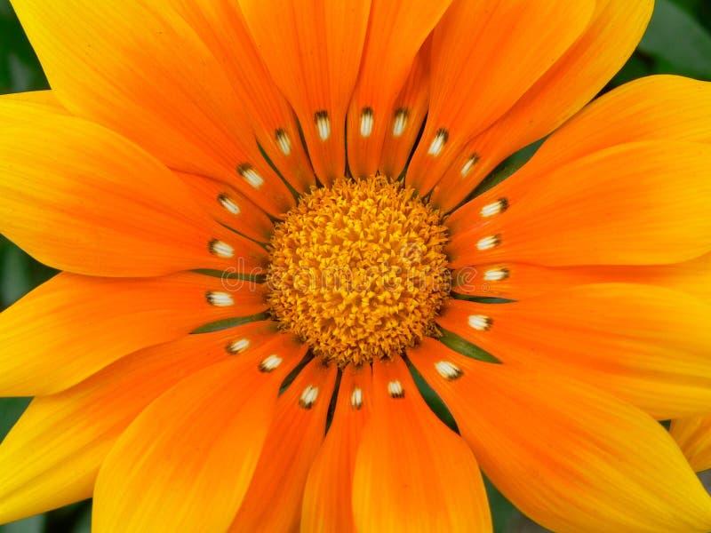 橙色交响乐 免版税图库摄影