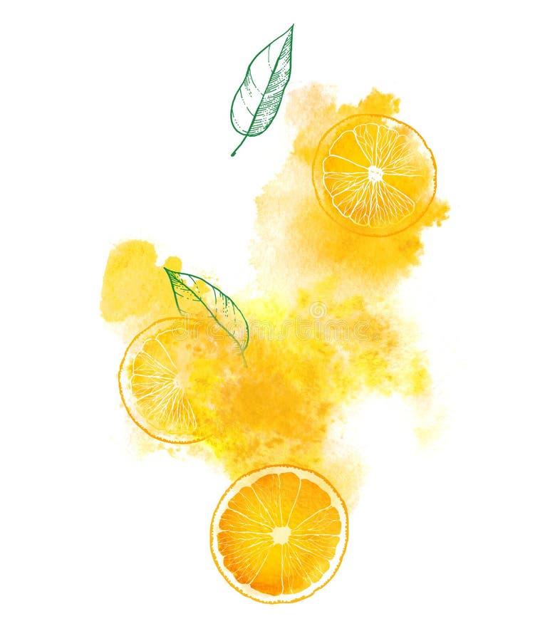 橙色切片和水多的飞溅在白色背景 手画水彩例证 向量例证