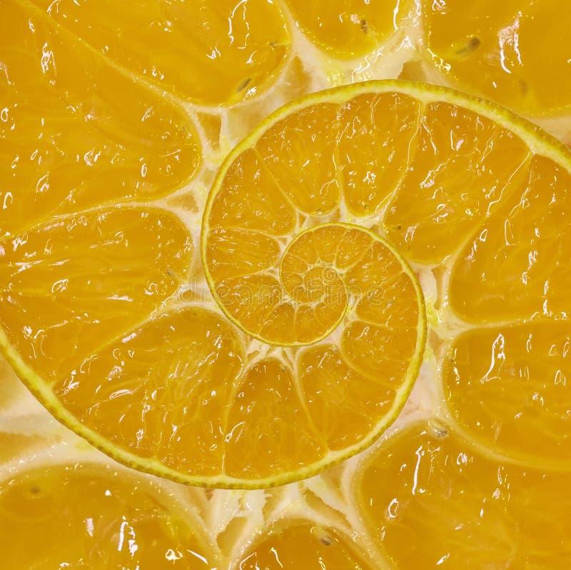 橙色切片螺旋漩涡摘要分数维背景 橙色切片螺旋背景样式 不可能的抽象橙色食物 免版税库存照片