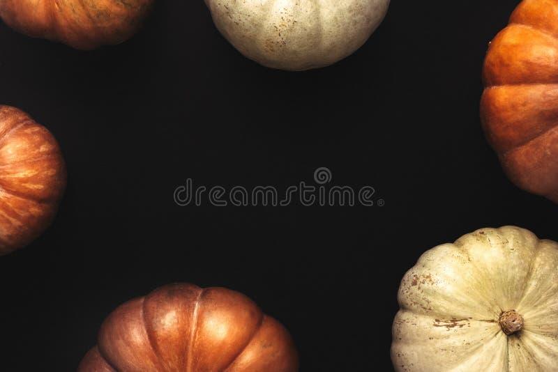 橙色和白色南瓜万圣夜框架  免版税图库摄影