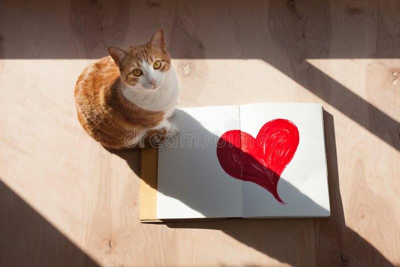 橙色和白色虎斑猫打开了与红色心脏的剪影书 免版税库存照片