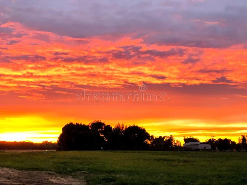 橙色和黄色日落和树在阴影 免版税图库摄影