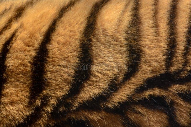 橙色和黑镶边老虎毛皮动物背景样式 库存照片
