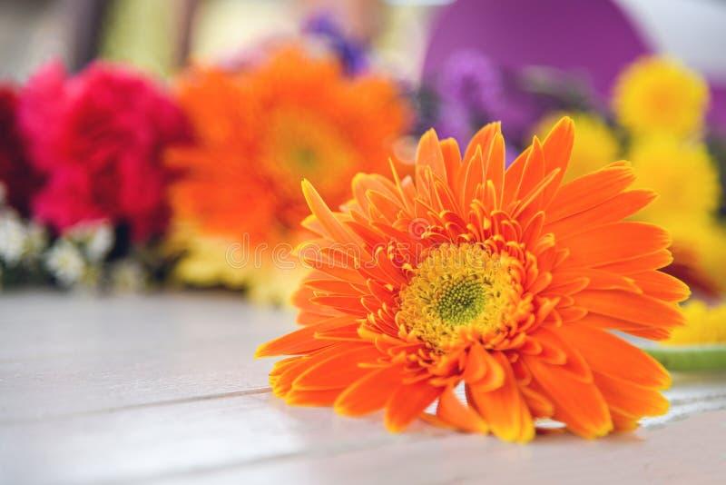 橙色大丁草雏菊花春天夏天开花美好在白色木五颜六色的花背景 免版税库存图片