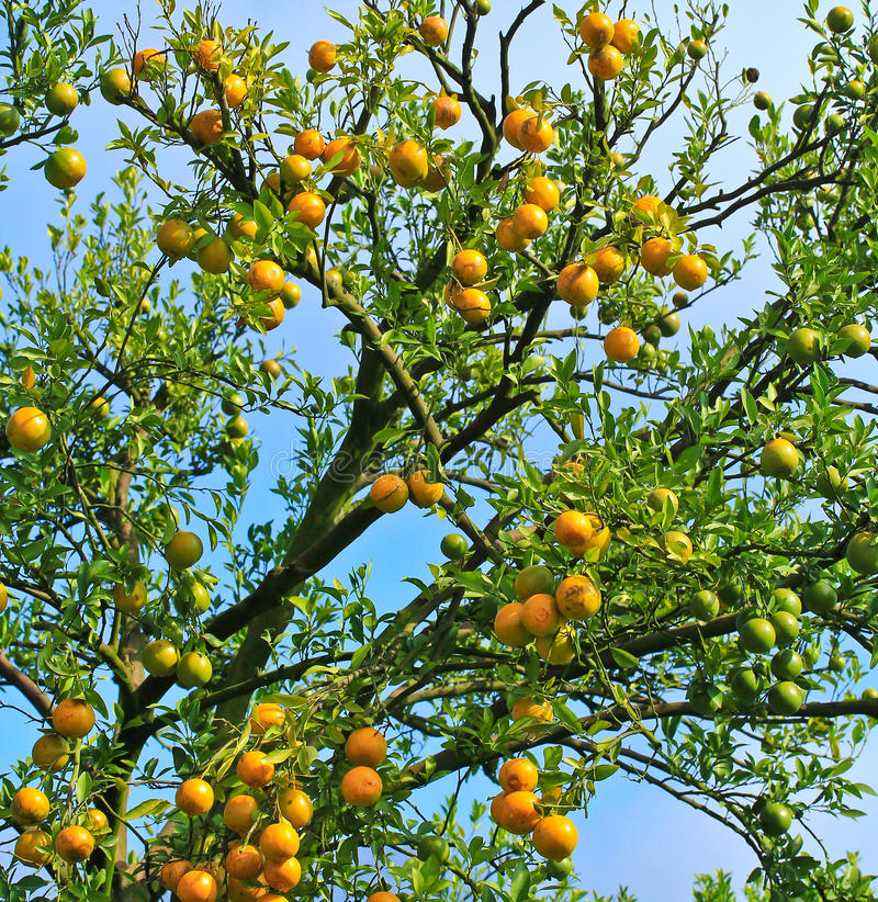橙色庭院 免版税库存照片