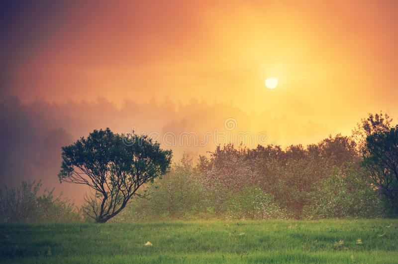 橙色日落在乡下 免版税库存图片
