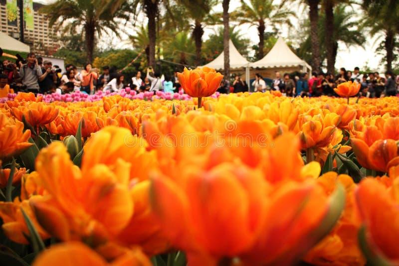 橙色春天 库存照片