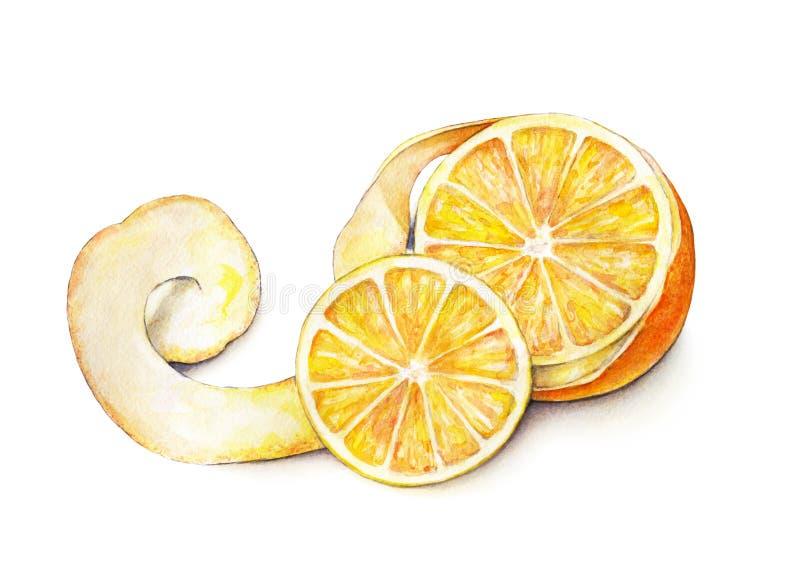 橙色果子被剥皮的成熟 手工 热带的果子 健康的食物 水彩 向量例证