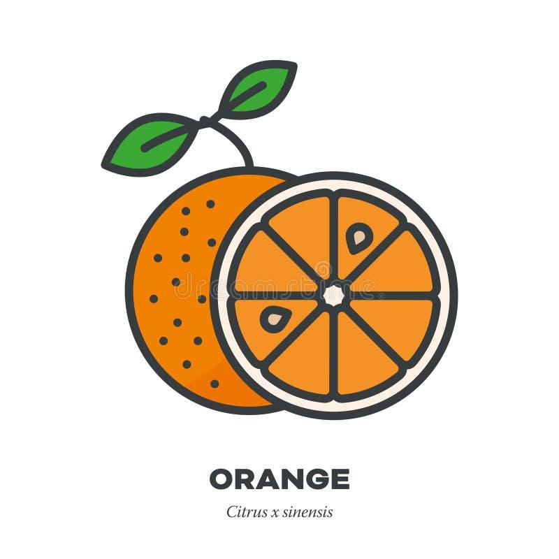 橙色果子象,填装了概述样式传染媒介 库存例证