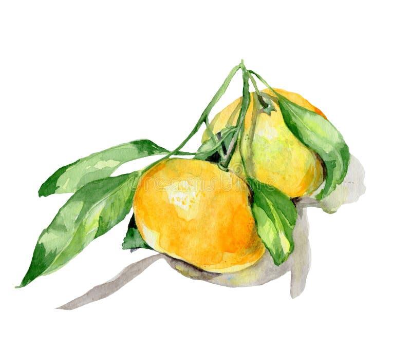 橙色果子水彩 免版税库存图片