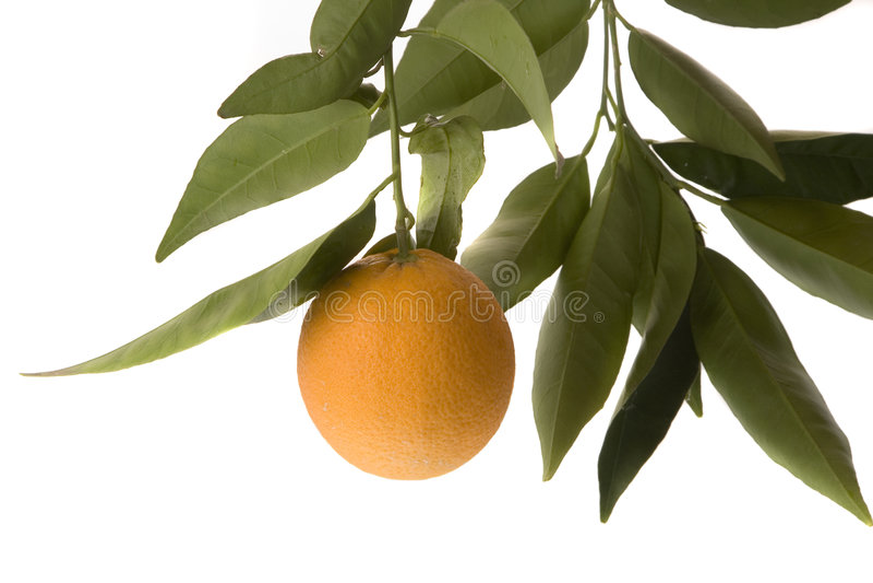 橙色查出的叶子 免版税图库摄影