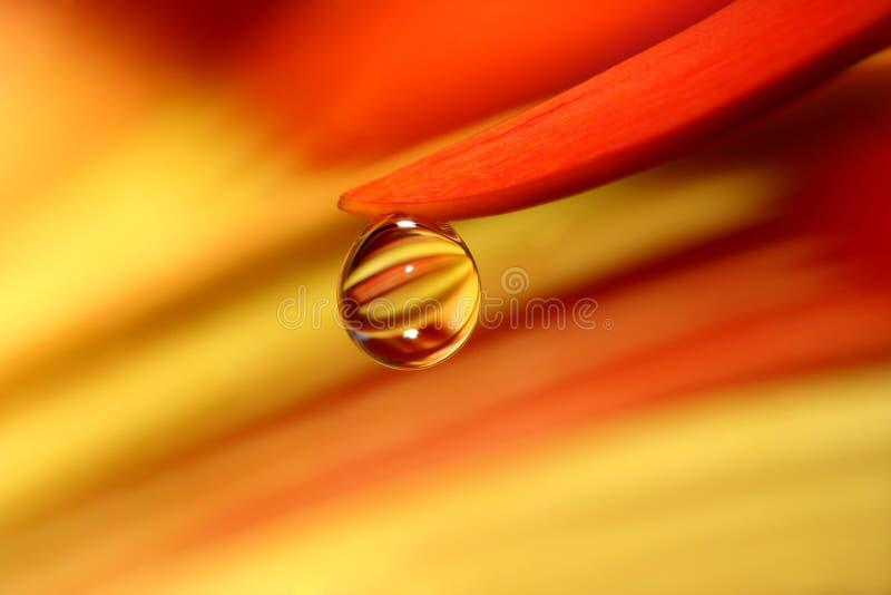 橙色泪花 库存图片